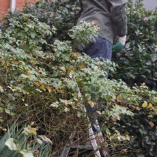 Minimes 2018 : session de printemps de jardinage urbain !